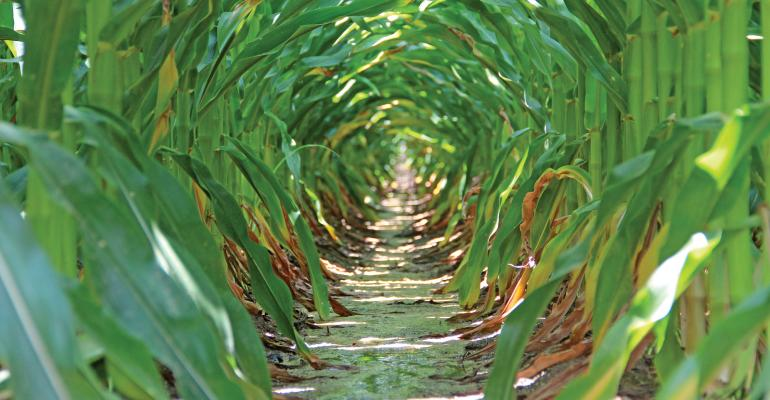 Most comprehensive genetic analysis of corn completed