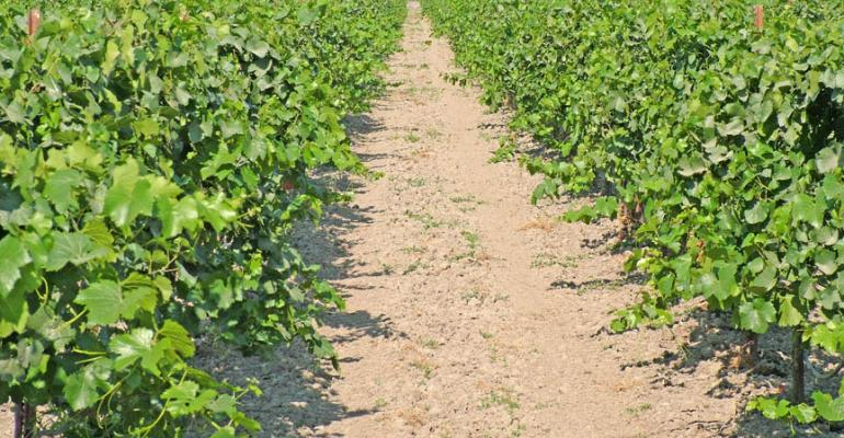 Fresno County raisin grower expects good quality crop