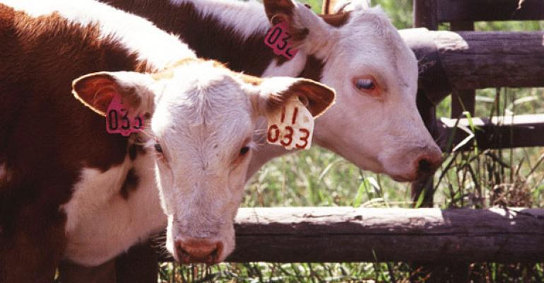 preconditioned calves valuable high demand