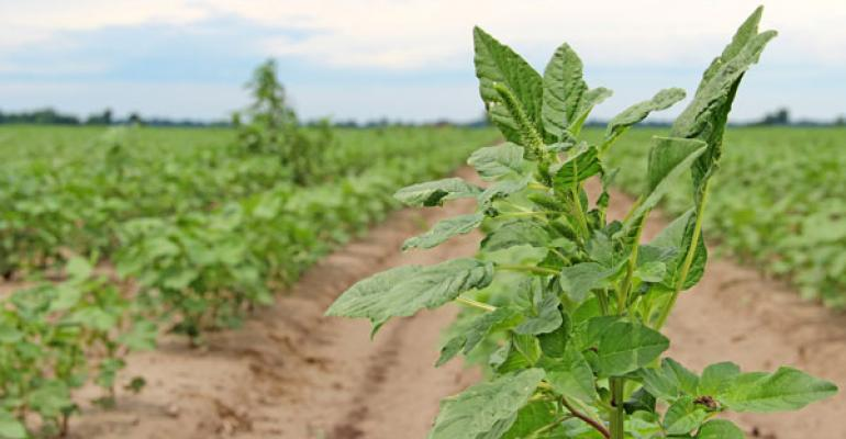 Session will update Alabama growers on weed resistance issues, new technology