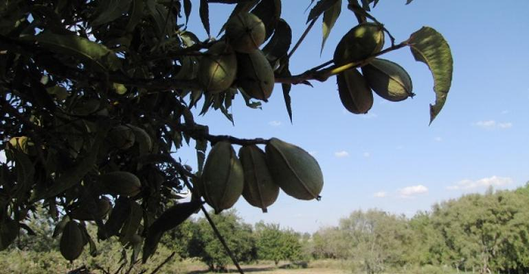 Pecan quality from irrigated orchards should be especially good this year according to a Texas AampM AgriLife Extension Service expert