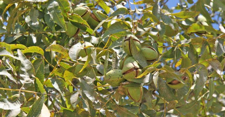 More profit potential in Southwest tree-hedged pecans
