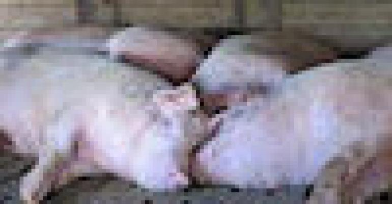 Profitable Year Expected for the Pork Industry