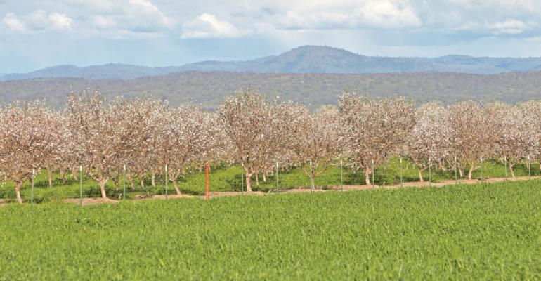 California almonds a positive tale of agricultural water use