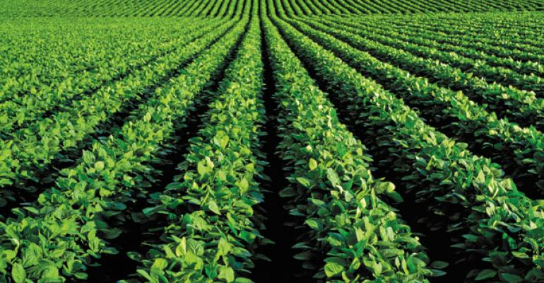 Demand heats up for soybeans