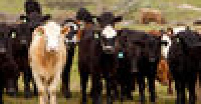 USDA cattle report pegs more expansion than traders expected