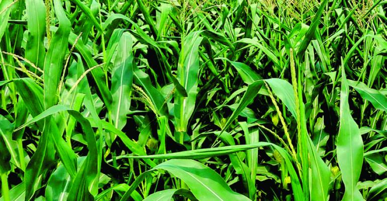 A healthy crop with a topyielding future is the goal of every farmer but the road to higher yields involves a growing sophistication in the use of crop fertility