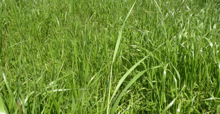 Is ryegrass haylage right for your operation?