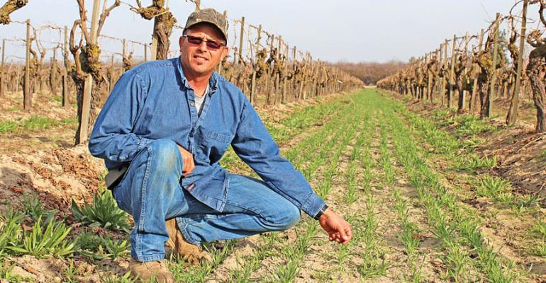 Steve Dee in one of his Thompson Seedless raisin vineyards west of Kerman Calif