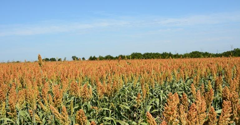 In Texas planted sorghum acreage was about the same as last year but has seen a 9 percent increase in harvested acres early in the year