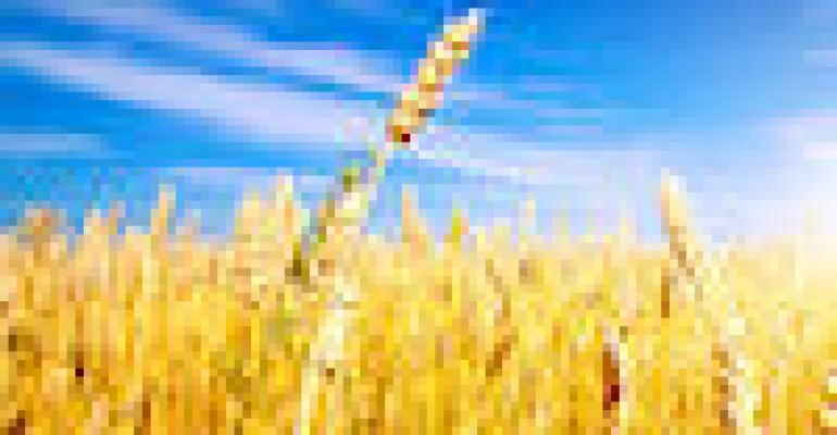Consider Controlled-release Nitrogen For Winter Wheat