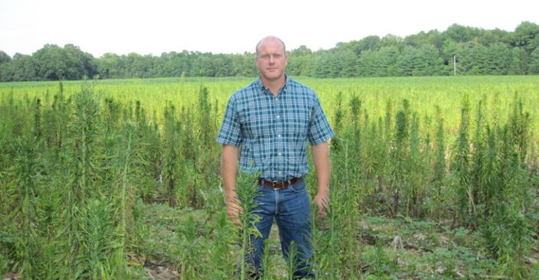 Tillage is one option for destroying emerged glyphosateresistant horseweed before planting but there are no herbicide options to control it after planting when weeds reach this size says Purdue University weed scientist Bryan Young Hand pulling is the only option to prevent seed production