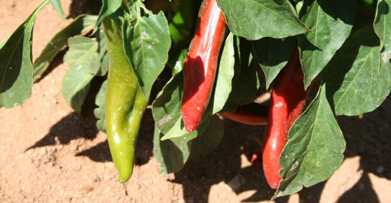 New Mexico chile harvest heats up as cooler weather arrives