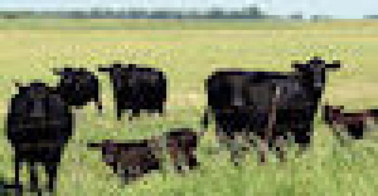 Unique Purdue Field Day Appeals To Rural Families, Beef Producers