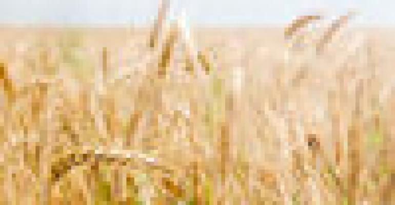 USDA Continues GM Wheat Investigation as Japan Lifts Import Ban