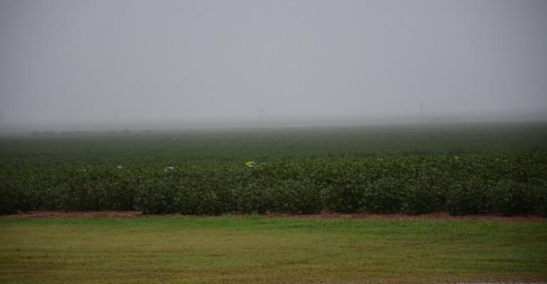 COTTON GETS another soaking as September brings another storm system to the Texas High Plains