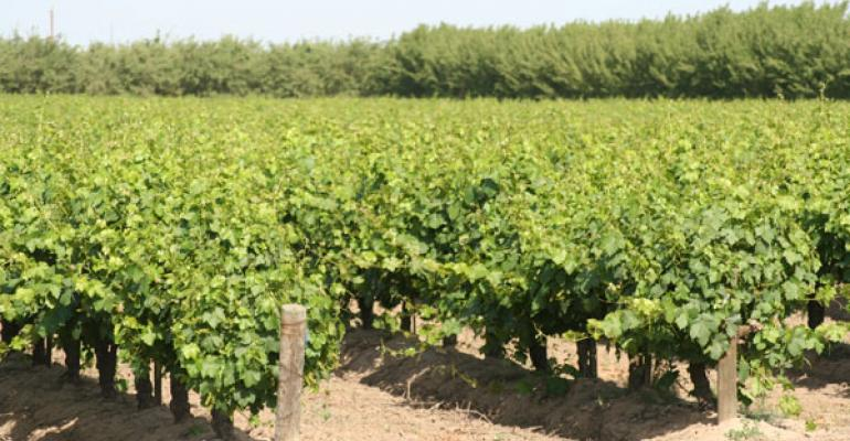 Nab weed escapees with dormant season vineyard survey