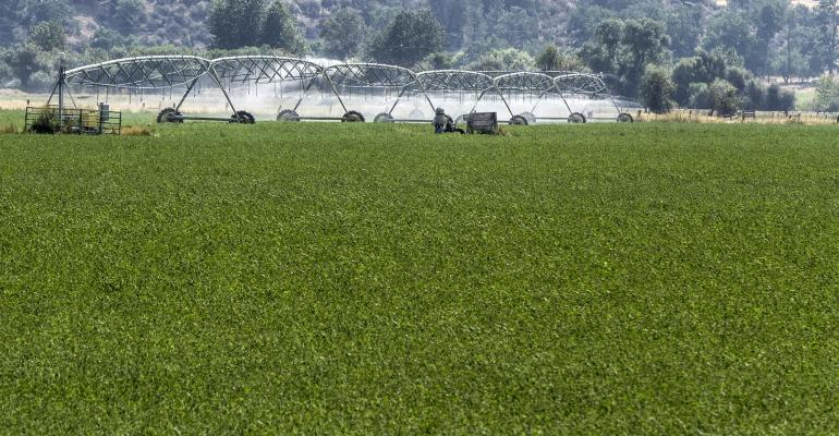 Reduced Lignin in alfalfa may help boost milk production