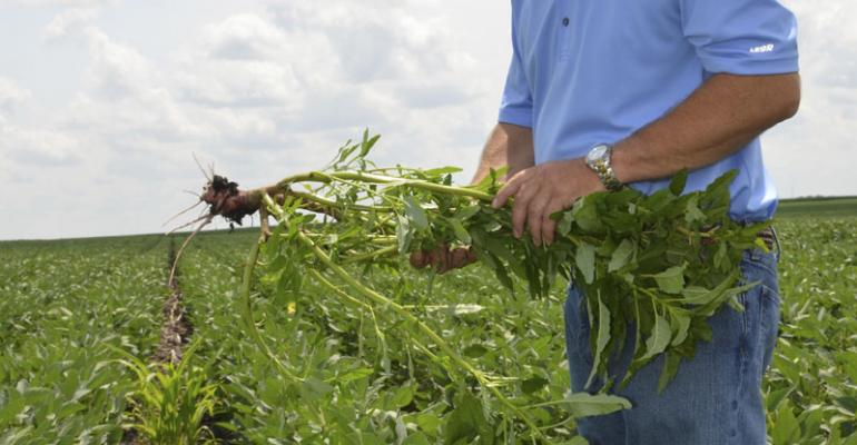 8 tips for successful weed control