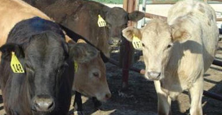 Future growth in cattle and beef supplies depends on cowcalf producer decisions Texas AgriLife photo