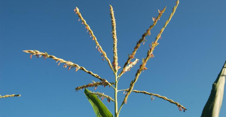 Aug. 26 Crop Progress: Corn crop nearly one-quarter dented, soybean pod set catching up to average