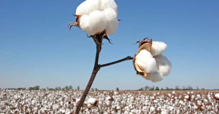 Cotton prices remain in a tight trading range