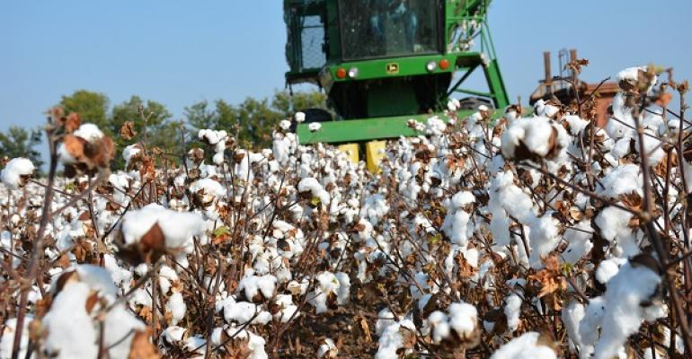 Latest supply and demand numbers a nonevent for cotton