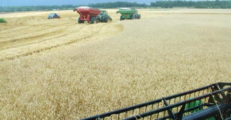 Despite spring cold and rain, Arkansas winter wheat does well