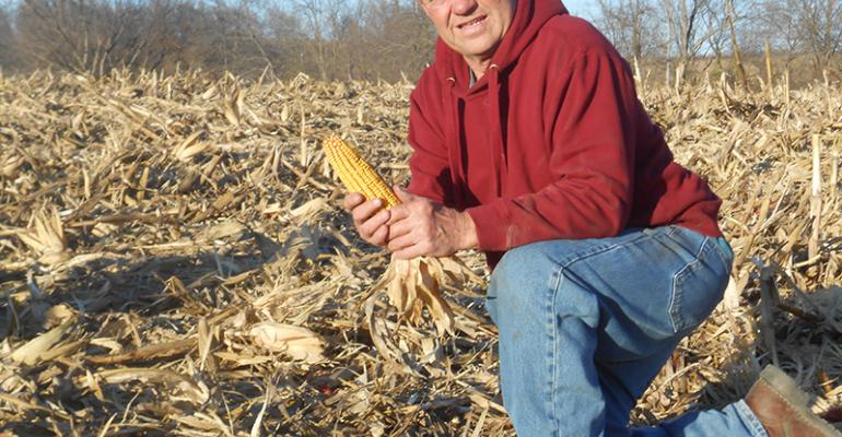 Mark Meyers of Nehawka Neb holds an ear of DeKalb DroughtGard corn that he grew in a field that usually gets less rainfall than the rest of his farm According to John McNamara agronomist for Wiles Brothers Fertilizer in Plattsmouth Neb about 25 of the marketplace in southeast Nebraska planted a droughttolerant hybrid in 2014
