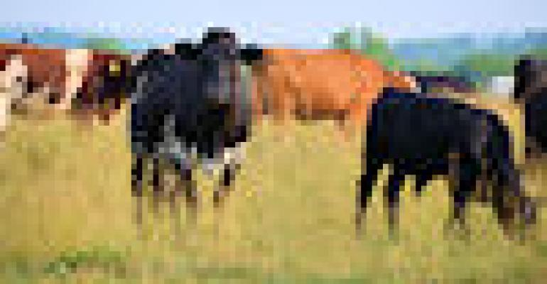 Beef herd begins multi-year expansion trend faster than expected