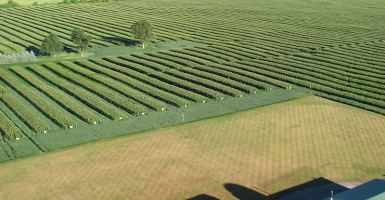An aerial view of Dean Glenney39s alternating strips of corn and beans tells only part of the story More important is the practice of planting directly over the previous year39s rows a practice he has followed for more than 20 years It allows him to restrict traffic to only two rows leaving the other four untouched