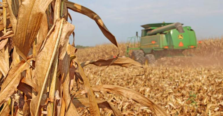 Find out what's next for corn and soybean markets?