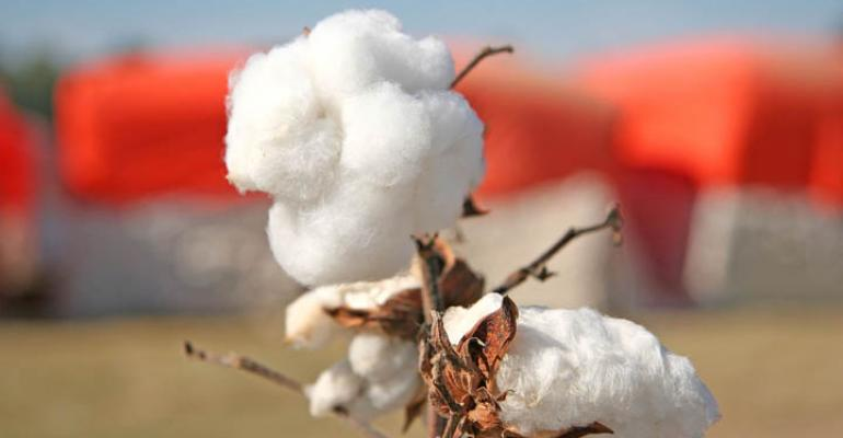 Low cotton prices expected to persist