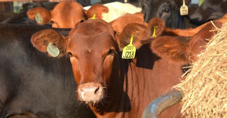 Cattle prices should remain historically high in 2015 as tight supplies of cattle continue However herd rebuilding is steadily increasing according to the latest US Department of AgricultureNational Agricultural Statistics Service cattle inventory report