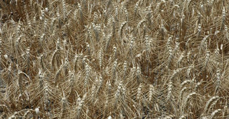 Wheat and grain prices established in bottom tier