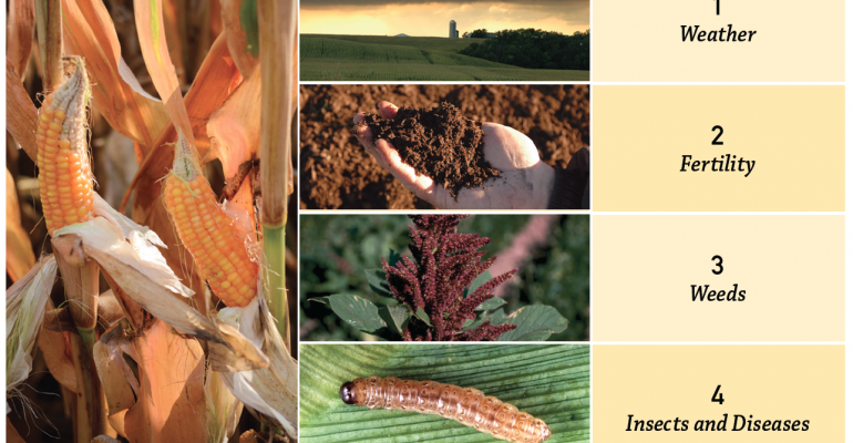 Focus on yield stressors to maximize return on crops