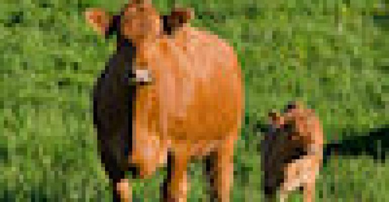 Lack of Oxygen Complicates Calves' First Breaths