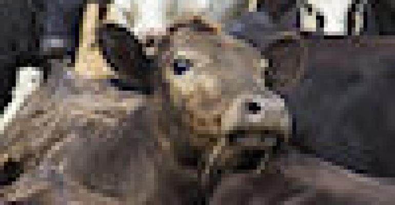 USDA Cattle on Feed Report: Placements slightly lower than expected