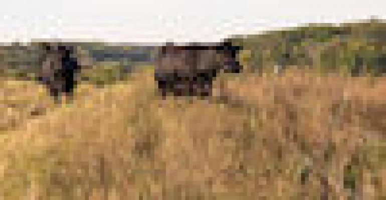 Is a fall calving season right for your beef cattle operation?