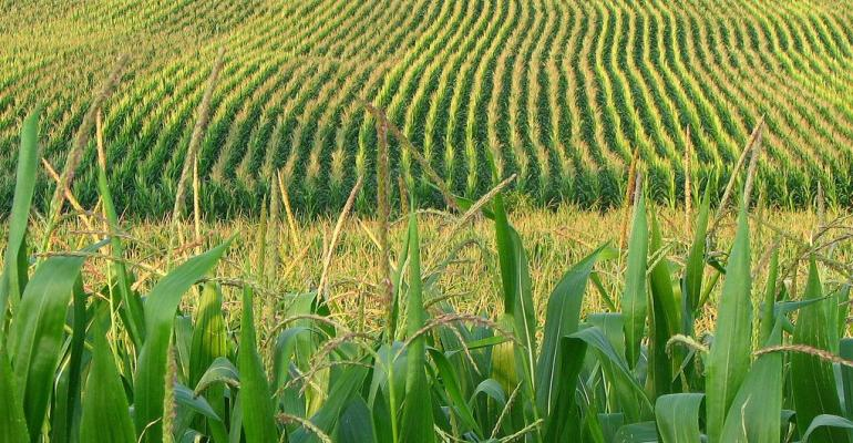 Global corn data could be more bullish