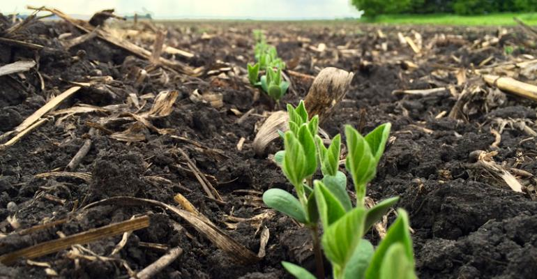 Crop Progress, June 12: Corn and soybean crop conditions improve