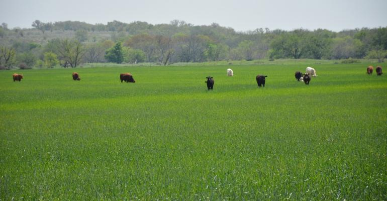 Stocker cattle will be a focus of the  Cattle Trails conference July 28 held this year in Lawton Okla