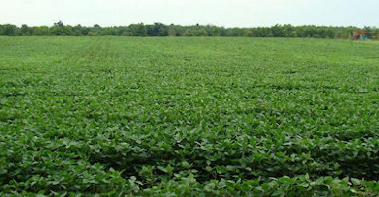 Restricted soybean roots make for hanging baskets of soybeans