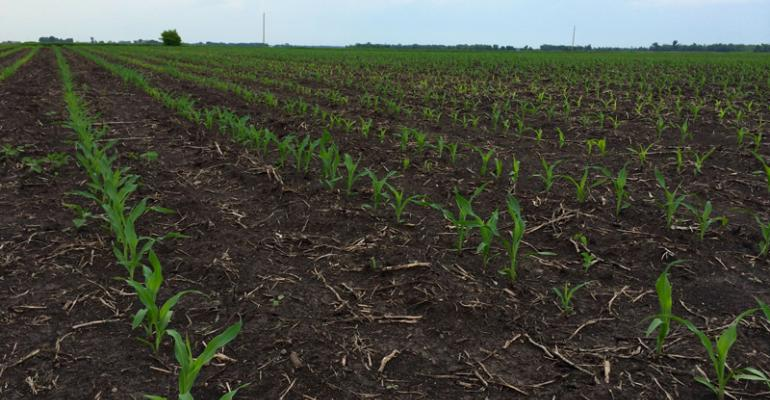 Crop Progress, June 5: Corn condition increases; soybean planting nears completion