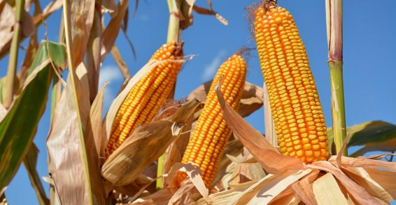 Grain markets could move up or down in 2016 depending on good yields or production failures