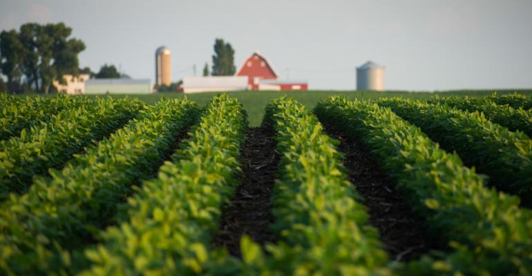 Soybean price uncertainty