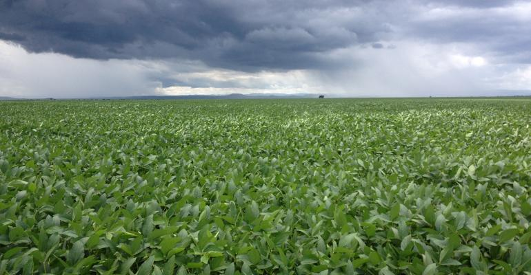Is a perfect storm brewing for old-crop soybeans?