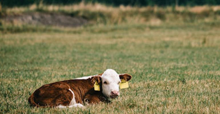 AFBF takes children's authors to cattle farms