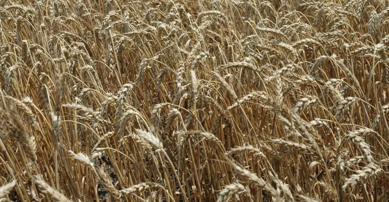 how well did  ARCCO program work for the 201415 wheat crop