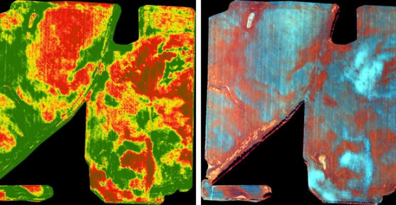 In the NDVI orthomosaic left the red area is sandy soil it produced very little wheat In the colorenhanced orthomosaic right the blue area represents the sandy soil with little growth